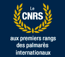 Palmares internationaux